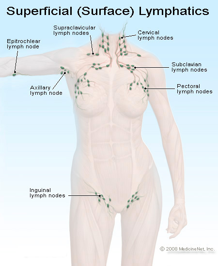 superficial_lymphatics